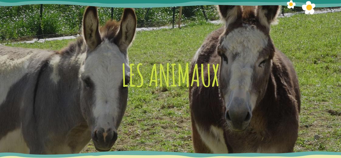 Les animaux de la ferme du Gers