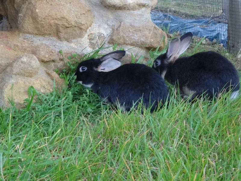 Parc Gers lapin ferme le Vallon des Rêves