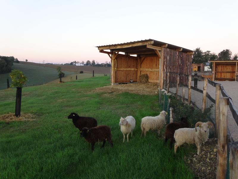 parc-gers-moutons-ferme-levallondesreves-02